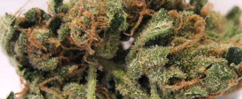 Blueberry Headband Odor and Flavors