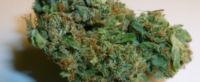 Bubblegum Kush Medical Use and Benefits