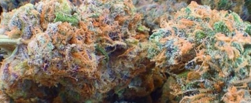 Fruity Pebbles Odor and Flavors
