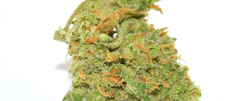 Island Sweet Skunk Medical Use and Benefits