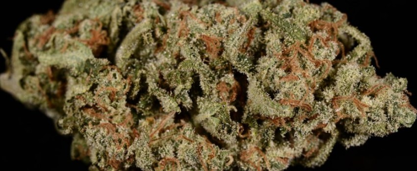 Jack Flash Odor and Flavors