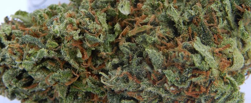 California Orange Odor and Flavors