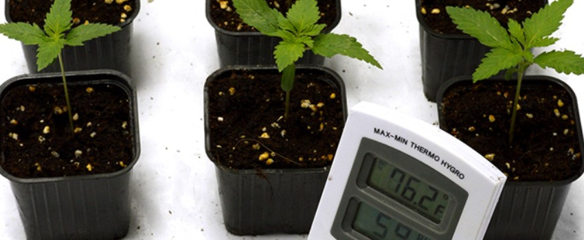 Give Optimal Temperature at Different Stages of the Plant