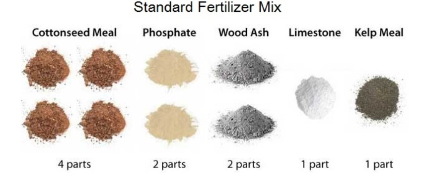 The Best Marijuana Fertilizers for Different Mediums