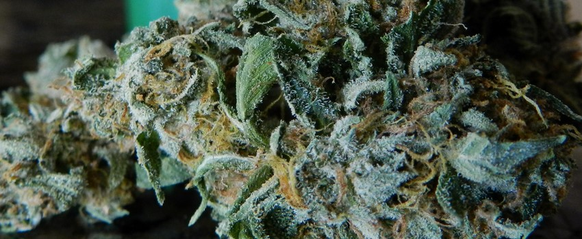 White Fire OG Medical Use and Benefits