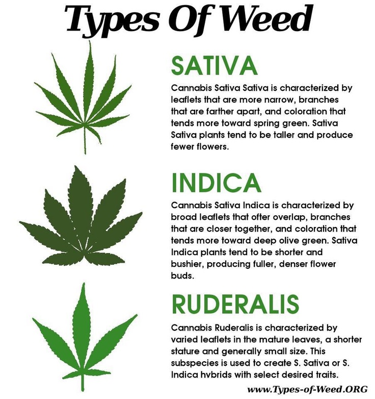 Lilies Types Of Leafs: Different Types Of Cannabis Plants