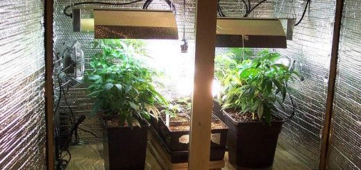How to Build a Budget-Friendly Cannabis Grow Room
