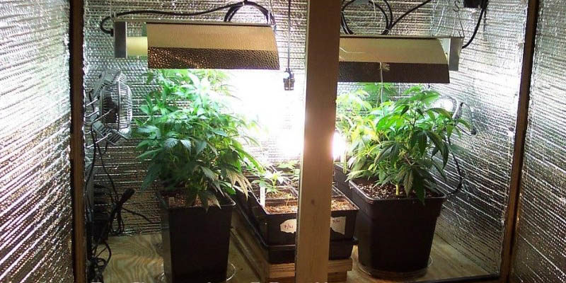 How To Build A Budget Friendly Cannabis Grow Room