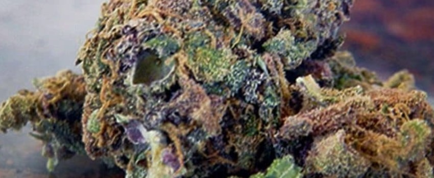 Mendocino Purps Effects