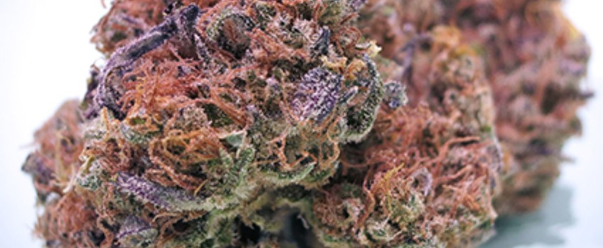 Mendocino Purps Adverse Reactions