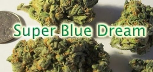 Super Blue Dream