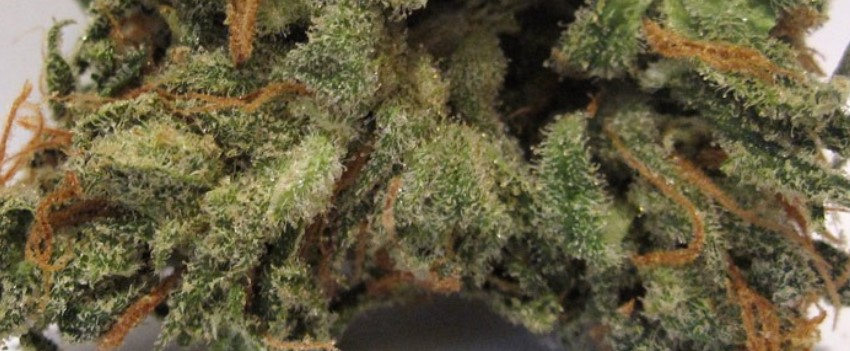 Super Blue Dream Medical Use and Benefits