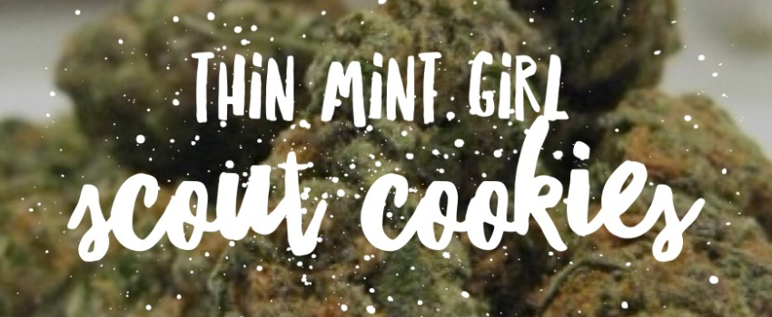 Thin Mint Girl Scout Cookies Odor and Flavors
