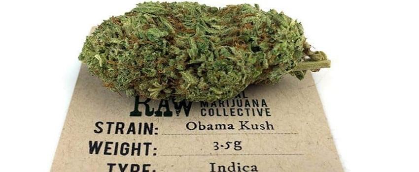 Obama Kush Effects