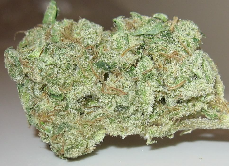 Cannalope Haze Bonza Blog Cannalope haze, aka cantaloupe haze, is a sativa cannabis strain. cannalope haze bonza blog