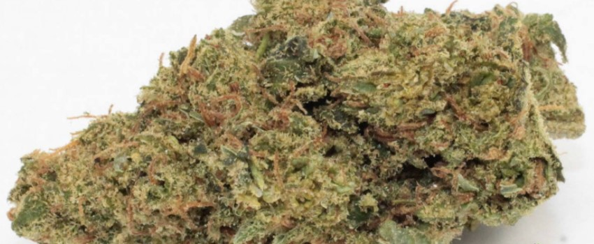 Dutch Treat Medical Use and Benefits