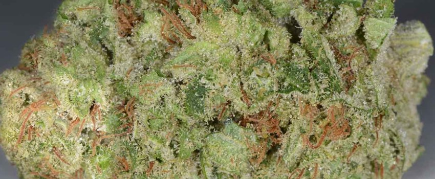 Dutch Treat Odor and Flavors