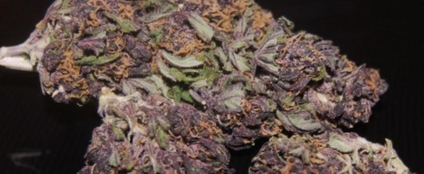 Purple Haze Effects