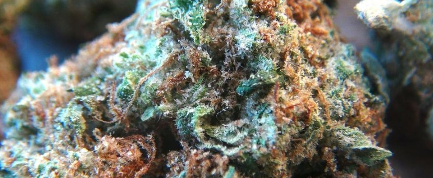 Bruce Banner #3 Effects