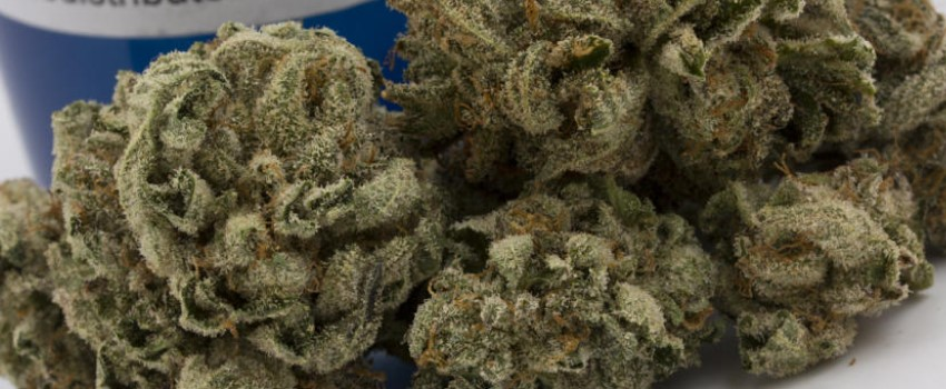 White Russian Odor and Flavors