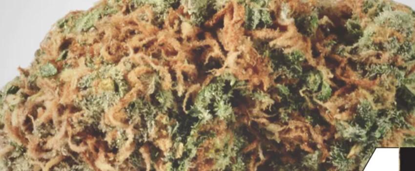 Orange Crush Medical Use and Benefits