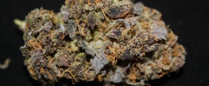 Purple Dream Odor and Flavors