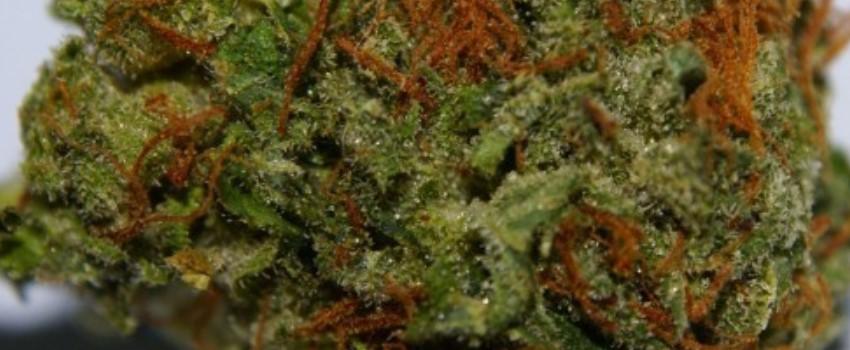 Pineapple Kush Medical Use and Benefits