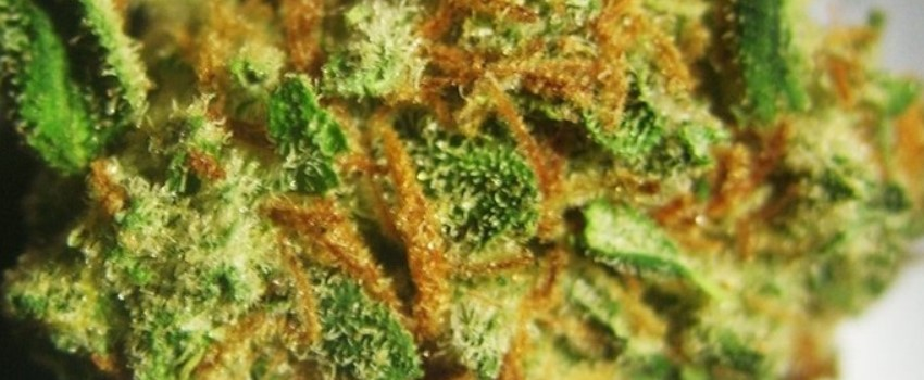 Chronic Odor and Flavors
