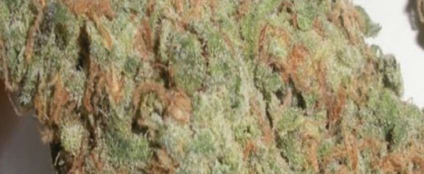 Green Dream Medical Use and Benefits