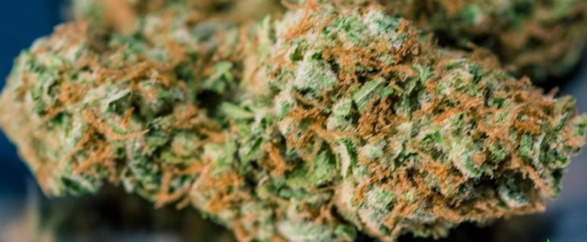 Green Dream Odor and Flavors