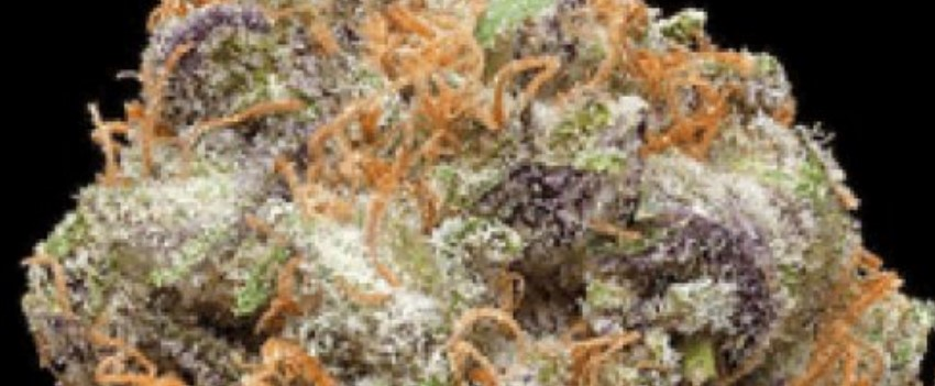 God's Green Crack Medical Use and Benefits