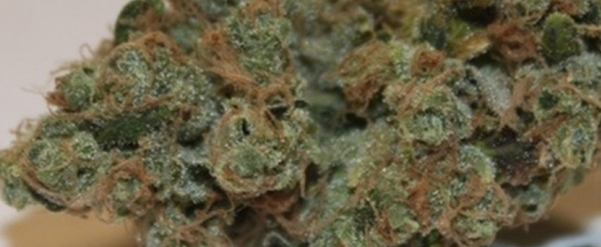 Chemdawg 91 Medical Use and Benefits