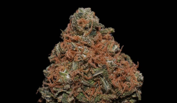 Brainwreck Strain Medical Use and Benefits