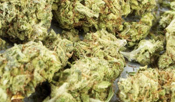 Las Vegas Purple Kush BX Strain Medical
