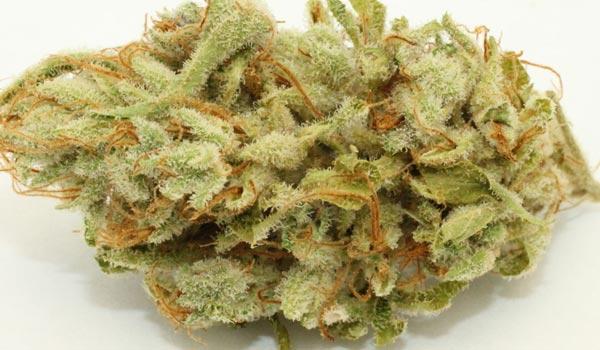 Kushberry Strain Medical